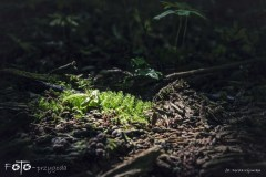 FOTO-Przygoda-w-Połczynie-Zdroju-Wiosna-19-Dorota-Kijowska-081a