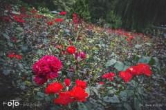 FOTO-Przygoda-w-Połczynie-Zdroju-Wiosna-19-Ewa-Kozik-007a