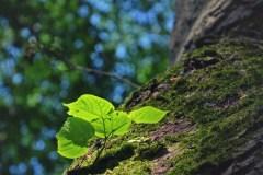FOTO-Przygoda-w-Połczynie-Zdroju-Wiosna-19-Joanna-Gasek-048a