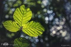 FOTO-Przygoda-w-Połczynie-Zdroju-Wiosna-19-Joanna-Gasek-069a
