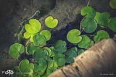 FOTO-Przygoda-w-Połczynie-Zdroju-Wiosna-19-Joanna-Gasek-149a