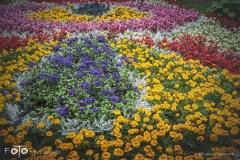 FOTO-Przygoda-w-Połczynie-Zdroju-Wiosna-19-Miłosz-Ziółkowski-005a
