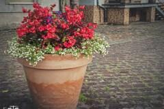 FOTO-Przygoda-w-Połczynie-Zdroju-Wiosna-19-Miłosz-Ziółkowski-014a