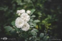 FOTO-Przygoda-w-Połczynie-Zdroju-Wiosna-19-Monika-Milczarek-073a