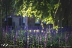 3-FOTO-Przygoda-w-Połczynie-Zdroju-Wiosna-19-0436b