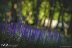 3-FOTO-Przygoda-w-Połczynie-Zdroju-Wiosna-19-0499b