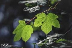 3-FOTO-Przygoda-w-Połczynie-Zdroju-Wiosna-19-0585b