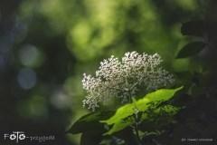 3-FOTO-Przygoda-w-Połczynie-Zdroju-Wiosna-19-0633b