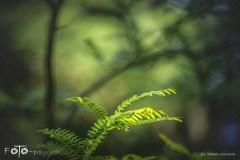 3-FOTO-Przygoda-w-Połczynie-Zdroju-Wiosna-19-0928b