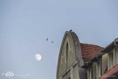 5-FOTO-Przygoda-w-Połczynie-Zdroju-Wiosna-19-1529b