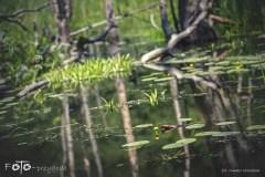 5-FOTO-Przygoda-w-Połczynie-Zdroju-Wiosna-19-1572b