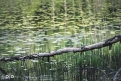 5-FOTO-Przygoda-w-Połczynie-Zdroju-Wiosna-19-1575b