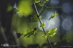 5-FOTO-Przygoda-w-Połczynie-Zdroju-Wiosna-19-2098b