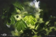 7-FOTO-Przygoda-w-Połczynie-Zdroju-Wiosna-19-2454b