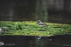 7-FOTO-Przygoda-w-Połczynie-Zdroju-Wiosna-19-2661b