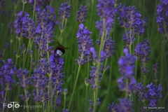 FOTO-Przygoda-w-Połczynie-Zdroju-Wiosna-19-Renata-Jasiul-013a