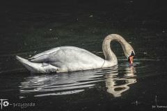 FOTO-Przygoda-w-Świdwinie-Wiosna-19-Bartosz-Głasek-025a