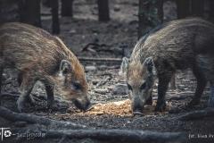 FOTO-Przygoda-w-Świdwinie-Wiosna-19-Ewa-Prygiel-055a