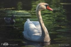 FOTO-Przygoda-w-Świdwinie-Wiosna-19-Ewa-Prygiel-075a