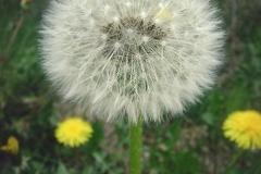 FOTO-Przygoda-w-Świdwinie-Wiosna-19-Katarzyna-Goździela-053a