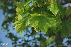 FOTO-Przygoda-w-Świdwinie-Wiosna-19-Magda-Jeziorna-005a
