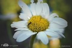 FOTO-Przygoda-w-Świdwinie-Wiosna-19-Magda-Jeziorna-035a
