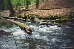 FOTO-Przygoda-w-Świdwinie-Wiosna-19-Magdalena-Jakubczak-019a