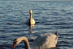 FOTO-Przygoda-w-Świdwinie-Wiosna-19-Magdalena-Warcholska-061a