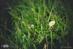 FOTO-Przygoda-w-Świdwinie-Wiosna-19-Milena-Hołojuch-025agotowe