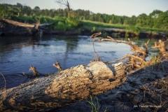 FOTO-PSTRYK - Dolina Rzeki Iny [Maj 18] 125b