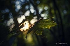 FOTO-PSTRYK - Dolina Rzeki Iny [Maj 18] 171b