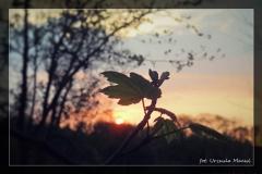 Foto-pstryk nad Iną [Kwiecień 18] 002