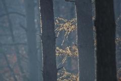 Grzybobranie [Listopad 18] 089b