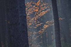 Grzybobranie [Listopad 18] 145b