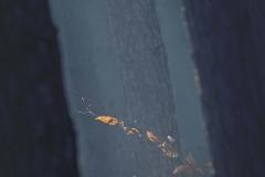 Grzybobranie [Listopad 18] 156b