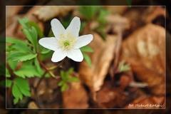 Hubert Łoński [Kwiecień 18] 008_Fotorgotowe