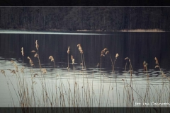 Iza Czerwonka [Kwiecień 18] 002_Fotorgotowe