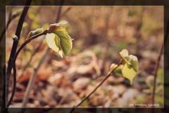 Marlena Szkołut [Kwiecień 18] 004_Fotorgotowe