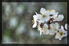 Nikola Tomala [Kwiecień 18] 011_Fotorgotowe