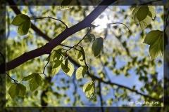 Sandra Łoś [Kwiecień 18] 014_Fotorgotowe