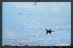 Wojtek Demko [Kwiecień 18] 012_Fotorgotowe