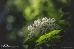 FOTO-Przygoda-w-Połczynie-Zdroju-Wiosna-19-0633b