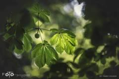 FOTO-Przygoda-w-Połczynie-Zdroju-Wiosna-19-2454b