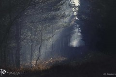 Grzybobranie-Listopad-18-207bgotowe