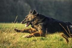 Psy-Wiosna-16-562bgotowe