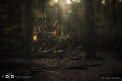 W-Lesie-Październik-16-083bgotowe
