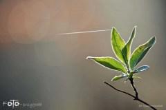 W-Lesie-Wiosna-15-069bgotowe