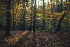 Przyroda - Krajobraz 051