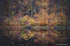 Plener w Podlipcach - Beata Pryma [Listopad 18] 012b