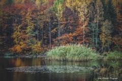 Plener w Podlipcach - Beata Pryma [Listopad 18] 023b